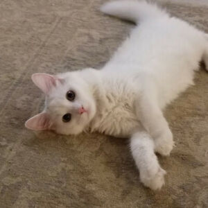 Travelling and need someone to take care of my cat for 4 months