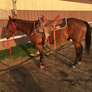 Solid 1D barrel horse with rodeo experience