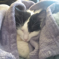 FREE: Adult Female Cat Needs New Home ASAP!