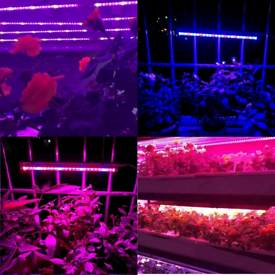 2 sets of Grow Plant Light 12W. Phytolamps