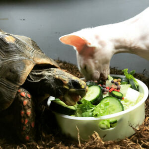 Reduced $$ Mature Red Footed Tortoise and Terrarium