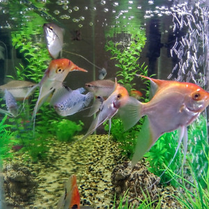 Tank, fish and accessories for Sale