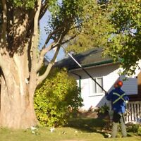 Stump Grinding & Tree Removal/Pruning