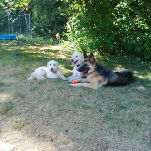 Unique Dog Sitting Services - Space available now for Fall Kawartha Lakes Peterborough Area image 1