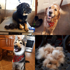 Dog grooming salon taking new clients