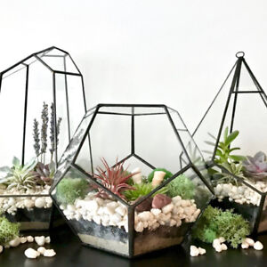 Plant Terrarium Buy New Used Goods Near You Find Everything