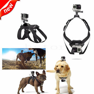GoPro Hero 4/3+/3/2/1 Harnais Pour chien Hound Fetch Chest Belt