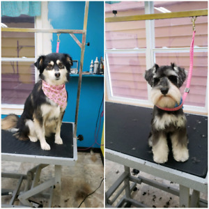 Looking for a dog groomer look no more