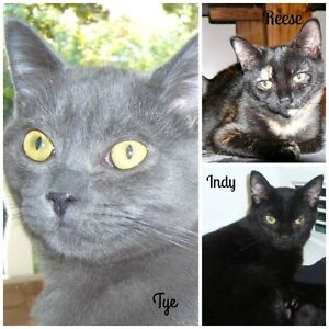 4 Month Old spayed/neutered Kittens!FREE!!! Adoption Fee Waived!