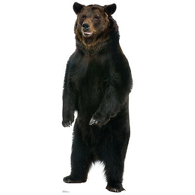 Cardboard Cutout (BROWN BEAR CARDBOARD CUTOUT Standee Standup Poster Prop Huge Animal FREE)