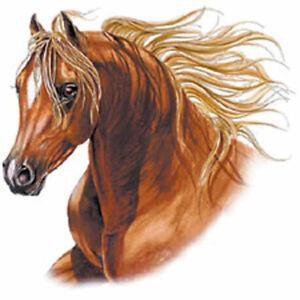 Pension pour chevaux à Saint-Marcellin