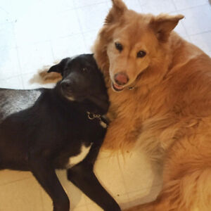 DOG DAYCARE/PLAY DATES for your medium-size dog in my home