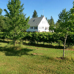 Quality of life in Northern Nova Scotia   Hobby farm   73 acres