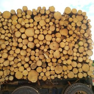 Harvester and Forwarder year round work