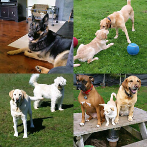 DOG BOARDING & DAYCARE  ** Donnas Pet Stop **
