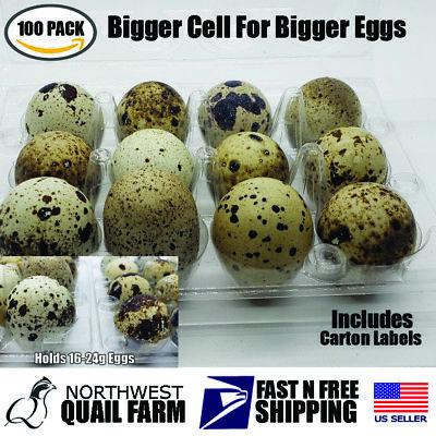 100 Larger Jumbo Quail Egg Cartons Holds 12 Eggs Secure Snap Close
