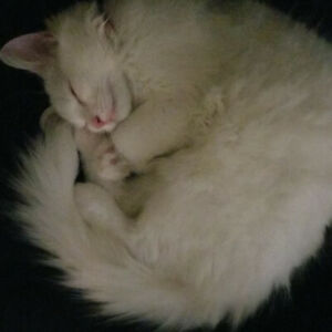 Travelling for 4 months and need a petsitter for a cat