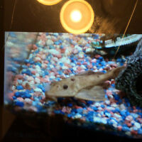 Fish Tank, cover, light, thermostat, rocks and accessory