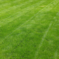 Grass Cutting - Weekly & BiWeekly