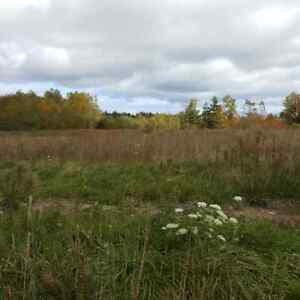 Land for Sale Mill Creek
