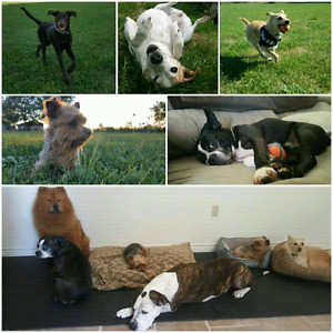 Summer Stays -Optimal Dog Daycare & Boarding -Accepting New Dogs