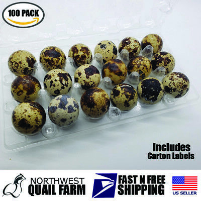 100 Jumbo Quail Egg Cartons Holds 18 Eggs Secure Snap Close Fast Shipping