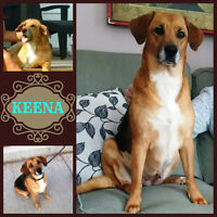 PRETTY KEENA NEEDS A FOSTER OR FOREVER HOME