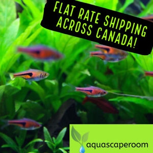 Get Your Live Potted Aquarium Plants 20% off for St. Patty's