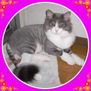 $50**  Smitten Kitten * GENTLE * Stress Free* MOBIL CAT GROOMING