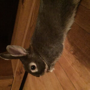 Rabbit needs to be re-homed