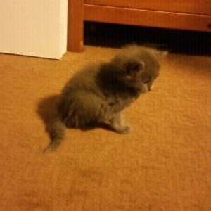kittens (ppu)