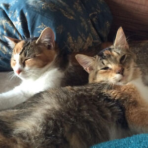 Affectionate rescue kittens looking for a home