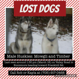 2 lost Huskies