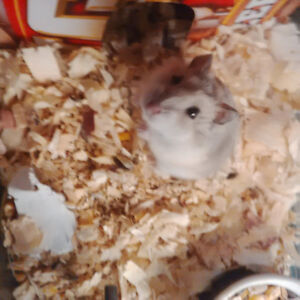 ✿ FREE Dwarf Hamster and Accessories ✿