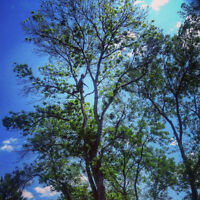 Tree Service/Landscaping
