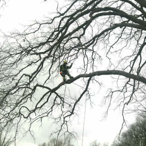 Fallen Tree/Branches Tree Removal/Pruning 24Hr Emergency Service