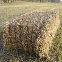 1500 pound Millet Greenfeed Bales