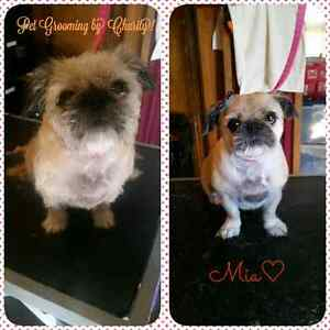 Professional one on one dog grooming!  Peterborough Peterborough Area image 3