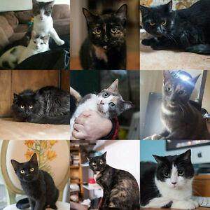 Cats and Kittens for Adoption! Sarnia Sarnia Area image 2
