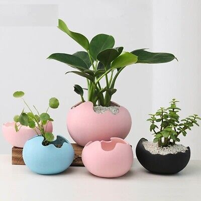 Planting Design (Flower Pot Decorative Office Planting Potted Garden Hydroponics Water Egg Design)