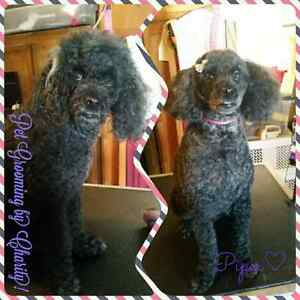 Professional one on one dog grooming!  Peterborough Peterborough Area image 2