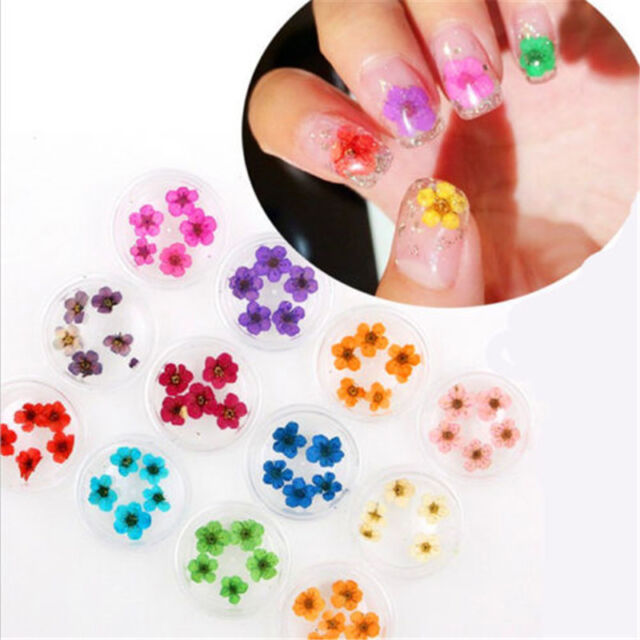 12 Colors Real Dry Dried Flower For 3d Uv Gel Acrylic False Tips