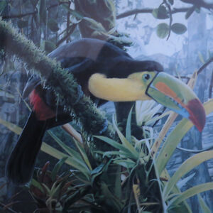 Art Picture Signed Numbered Toucan Rod Frederick The Lost World Kitchener / Waterloo Kitchener Area image 2