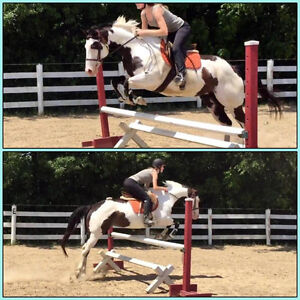 Two Lovely Mares Available for Part-Board