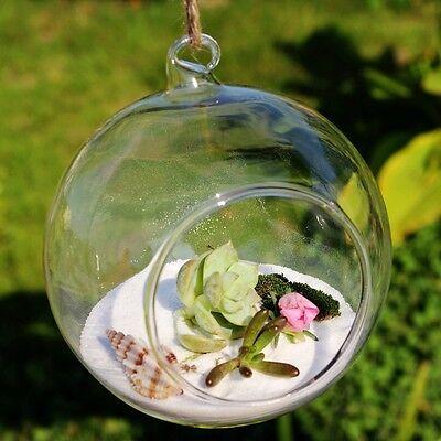 Glass Terrarium Globes (10 cm Hanging Glass Terrarium Globe / Terrarium Container / Glass)