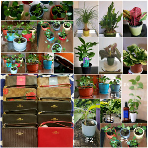 Indoor Plants, BNWT Coach wristlets, Brand new le creuset dishes