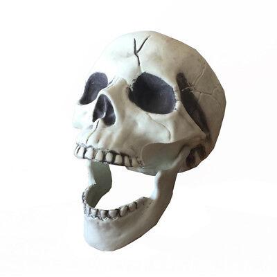 Halloween Skeleton Skull Life Size Plastic Skull for Halloween Decorations - Skeleton Plastic Life Size