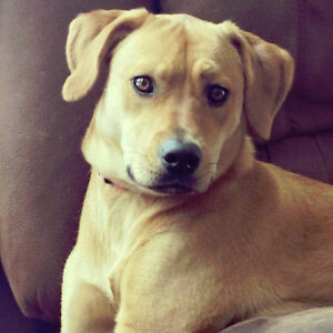Rehome our dog ~ Serious inquires only please.