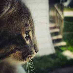 Offering Cat Sitting  &  Drop Ins in Cornwall