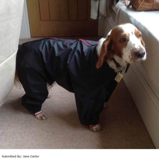Cosipet Showerproof Trouser/Track Suit 20in